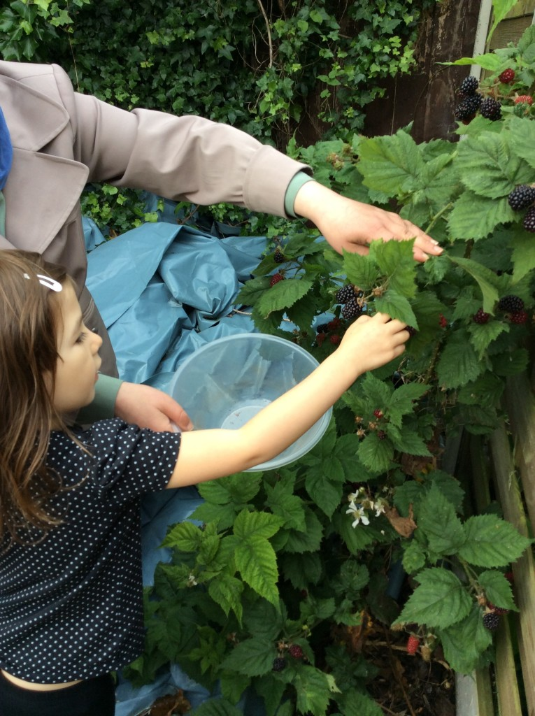 Blackberry Picking in our garden.