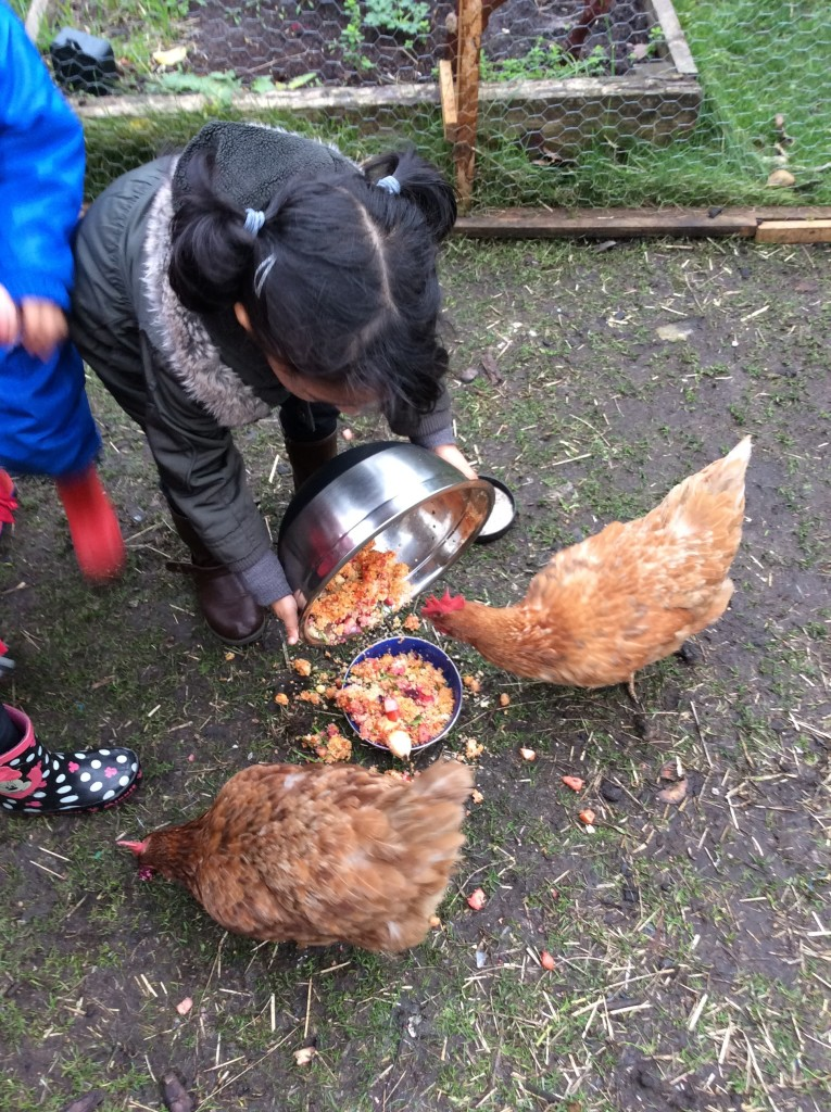 Feeding the chickens. We like taking care of them.