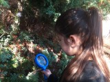 Forest School - Minibeast Hunt 1
