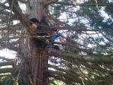 Forest School - Tree Climbing 1