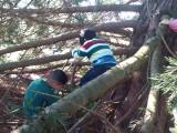Forest School - Tree Climbing 2