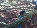 Forest School - Tree Climbing 3