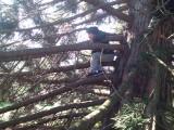 Forest School - Tree Climbing 4