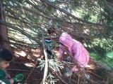 Forest School - Tree Climbing 5